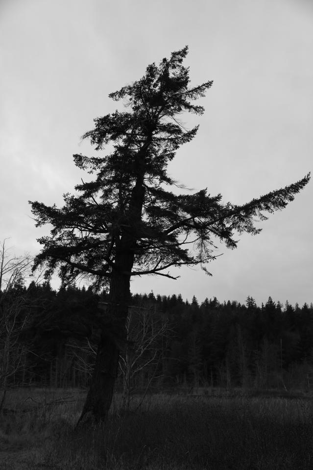 Ominous pines