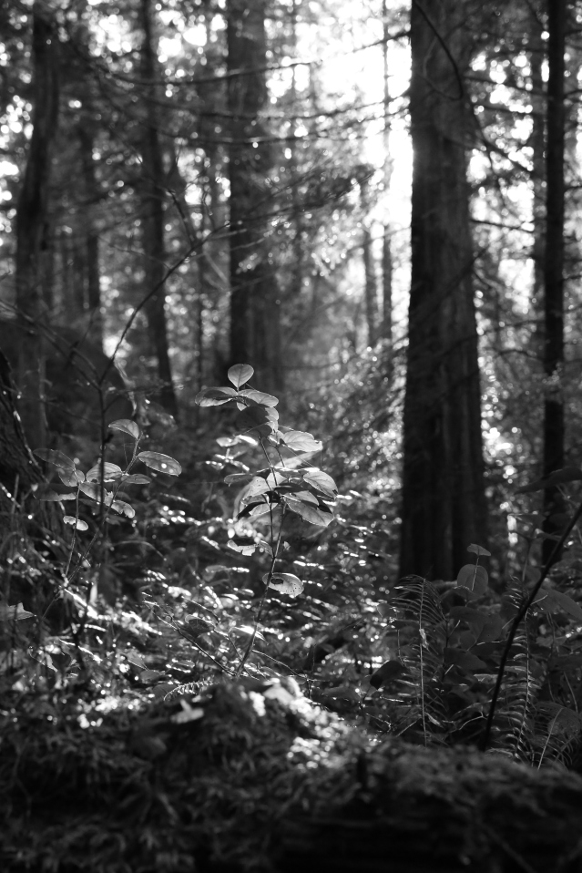Canadian rainforest